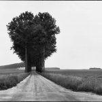 Henri Cartier Bresson Trees