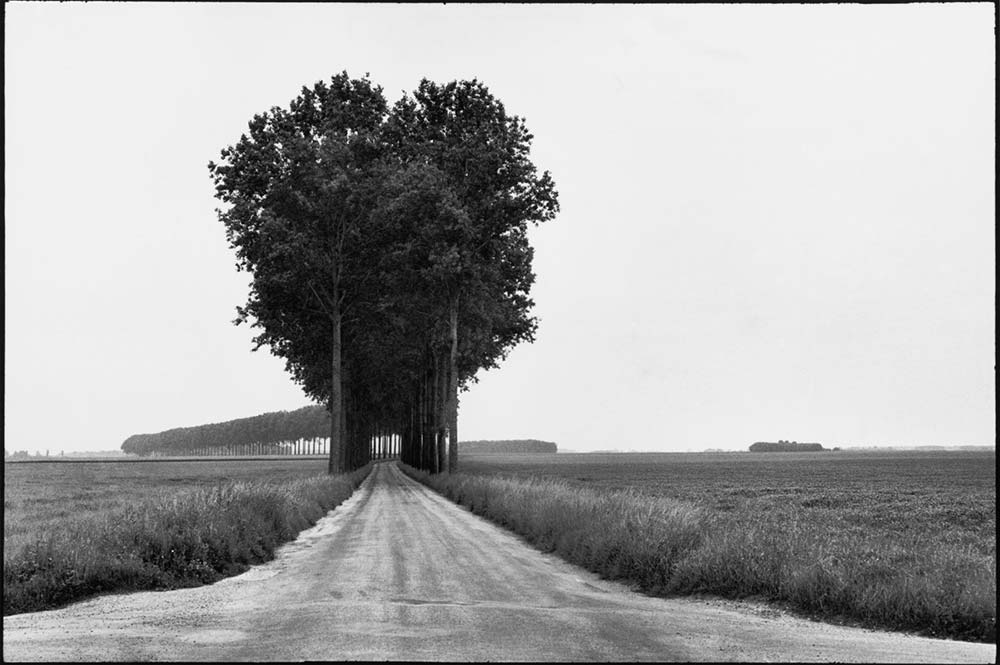 Henri Cartier Bresson Trees